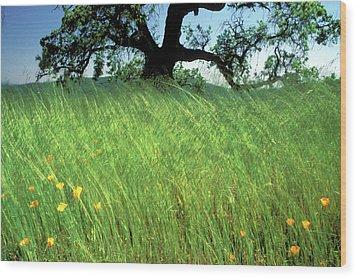 Windswept Poppies Wood Print by Kathy Yates
