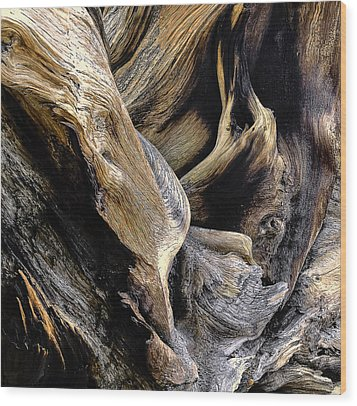 Windswept Roots Wood Print by The Forests Edge Photography - Diane Sandoval