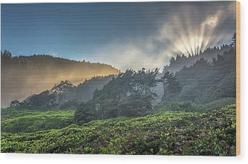 Wood Print featuring the photograph Windswept Trees On The Oregon Coast by Pierre Leclerc Photography