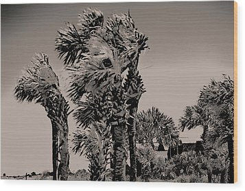 Windy Day At Beach Wood Print