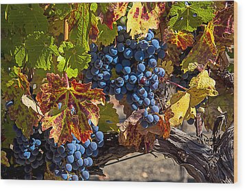 Wine Grapes Napa Valley Wood Print by Garry Gay