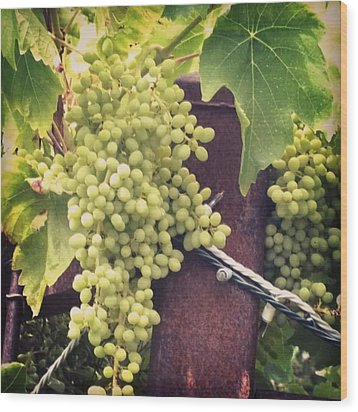 #wine On The #vine . Love These Little Wood Print by Shari Warren
