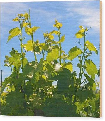 #wine #vines Reaching For The Sky :-) Wood Print by Shari Warren