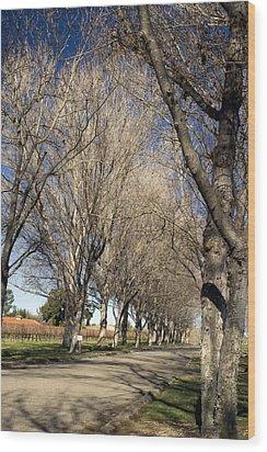 Winery Road Wood Print