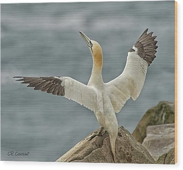 Wing Flap Wood Print by CR Courson