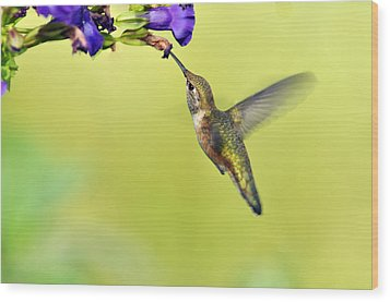 Winged Beauty A Hummingbird Wood Print