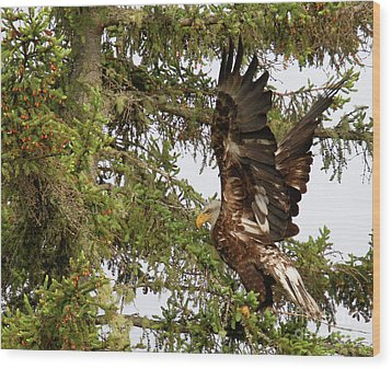 Wood Print featuring the photograph Winging-it Up The Tree 1 by Debbie Stahre