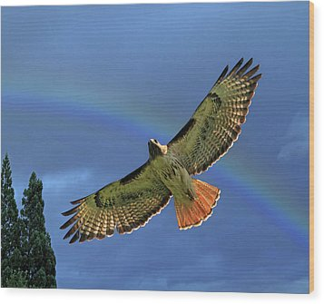 Wings 2 Wood Print by Donna Kennedy