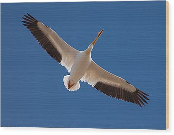 Wood Print featuring the photograph Wings Are Spread by Monte Stevens