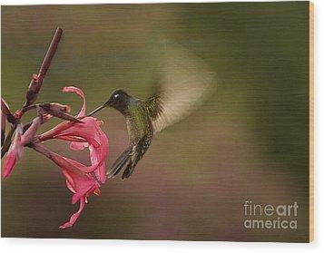 Wings In Motion 3 Wood Print by Anne Rodkin