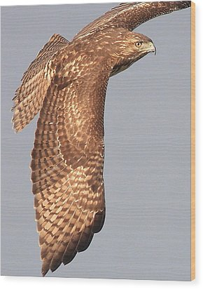 Wings Of A Red Tailed Hawk Wood Print by Wingsdomain Art and Photography