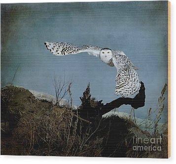 Wings Of Winter Wood Print by Heather King
