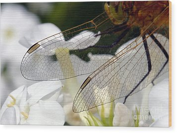 Wings On A Dragon Wood Print by Steve Augustin