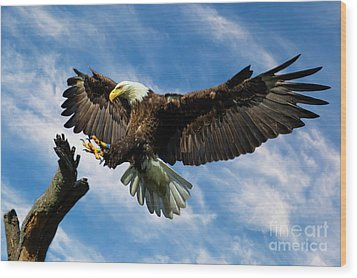 Wings Outstretched Wood Print