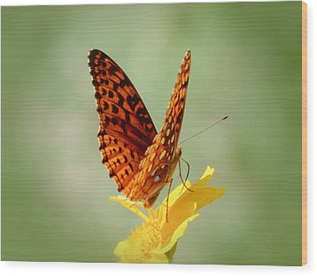 Wings Up - Butterfly Wood Print by MTBobbins Photography