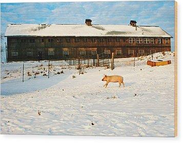 Winnie At Heartland Farm Sanctuary Wood Print