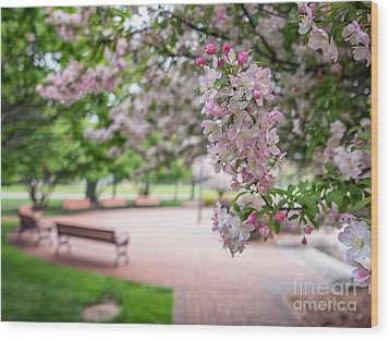 Winona Veterans Memorial With Blossoms Wood Print