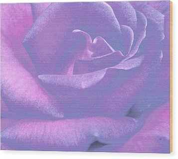 Winsome Rose 1 Wood Print by Will Borden