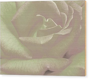 Winsome Rose 2 Wood Print by Will Borden
