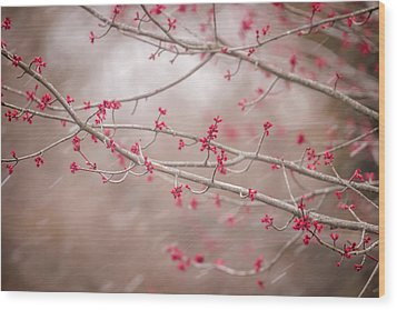 Wood Print featuring the photograph Winter And Spring by Terry DeLuco