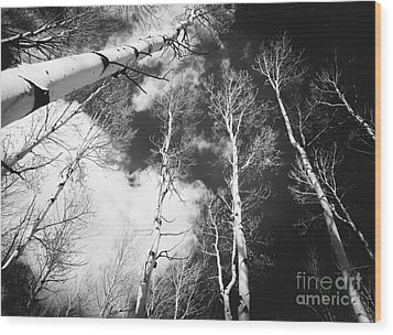 Wood Print featuring the photograph Winter Aspens by The Forests Edge Photography - Diane Sandoval