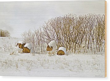 Winter Beauty Wood Print by Deborah Benoit