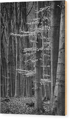 Winter Beech Wood Print