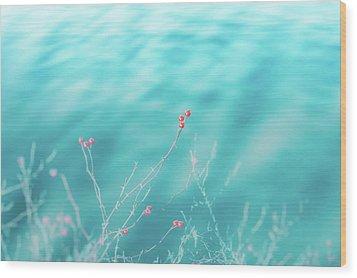 Winter Berries Wood Print by Lisa McStamp
