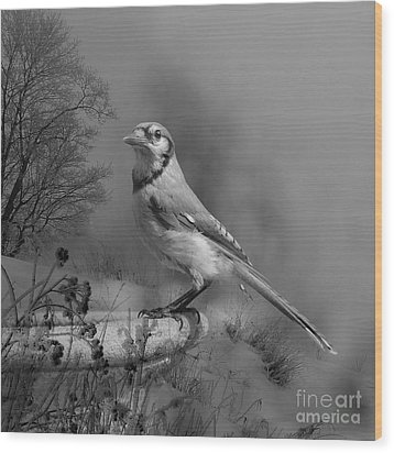 Winter Bird Wood Print by Jan Piller