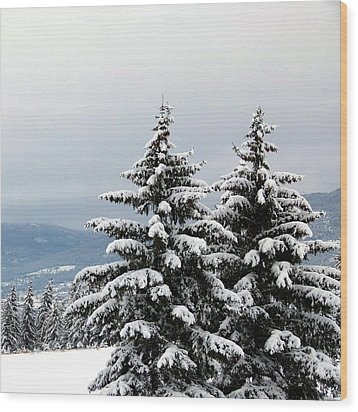 Wood Print featuring the photograph Winter Bliss by Will Borden