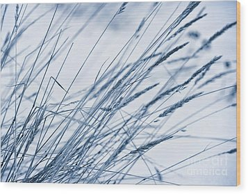 Winter Breeze Wood Print by Priska Wettstein