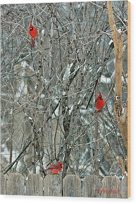Winter Cardinals Wood Print by Edward Peterson
