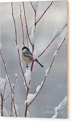 Winter Chickadee Wood Print