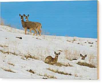 Wood Print featuring the photograph Winter Deer by Mike Dawson