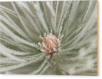 Wood Print featuring the photograph Winter Evergreen by Ana V Ramirez