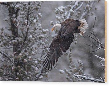Winter Flight Wood Print