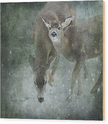 Wood Print featuring the photograph Winter Foraging by Sally Banfill