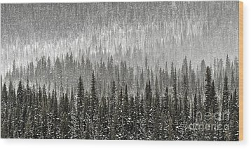 Winter Forest Wood Print by Brad Allen Fine Art
