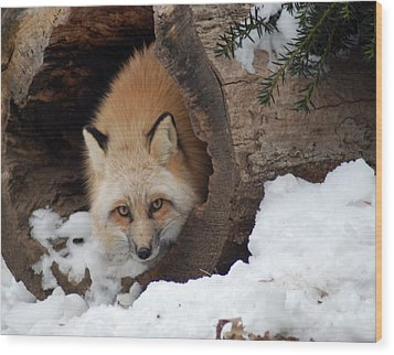 Winter Fox Wood Print by Richard Bryce and Family