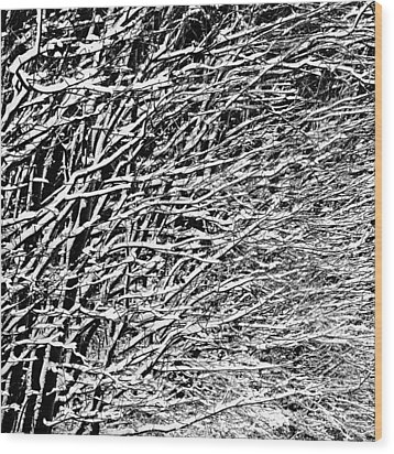 Wood Print featuring the photograph Winter by Gert Lavsen