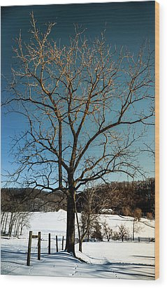 Wood Print featuring the photograph Winter Glow by Karen Wiles