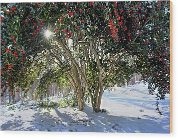 Wood Print featuring the photograph Winter Holly by Jessica Brawley