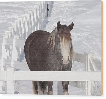 Winter Horse Wood Print by Debbie Stahre