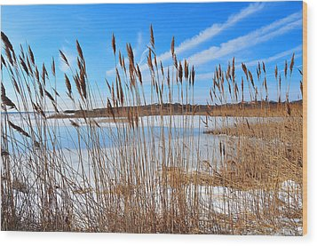 Winter In The Salt Marsh Wood Print by Catherine Reusch Daley