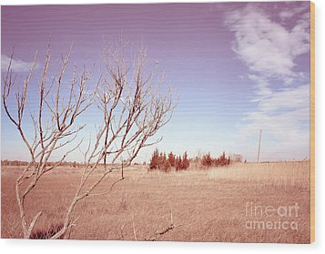 Wood Print featuring the photograph Winter Marshlands by Colleen Kammerer