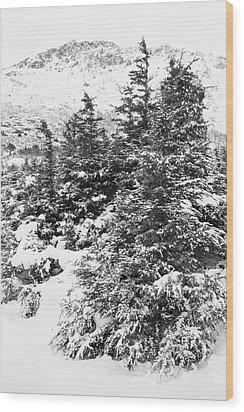 Winter Night Forest M Wood Print
