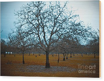 Winter Orchard Wood Print