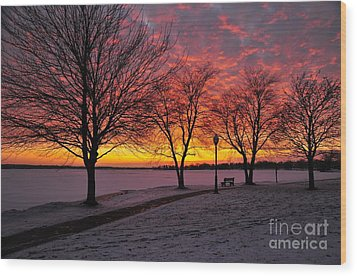 Wood Print featuring the photograph Winter Park by Terri Gostola
