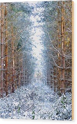 Winter Path Wood Print by Svetlana Sewell