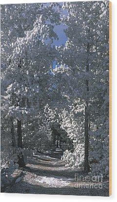 Winter Pathway Wood Print by Sandra Bronstein